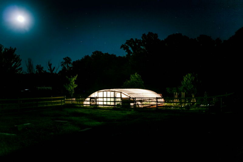 Greenhouse Night